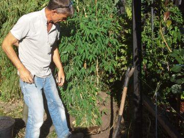 Søren planter bambus om sommeren