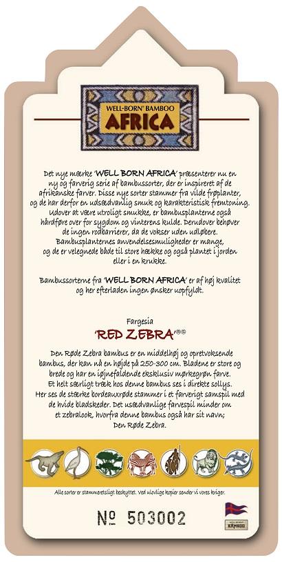 Zebra-bambus-information